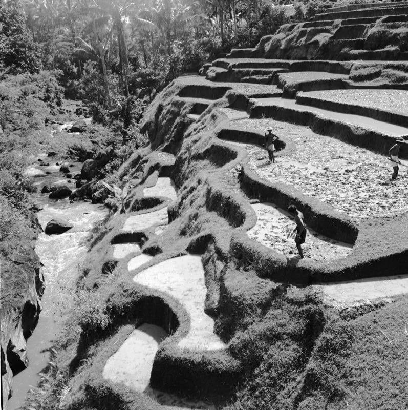 Terraces Of Bali